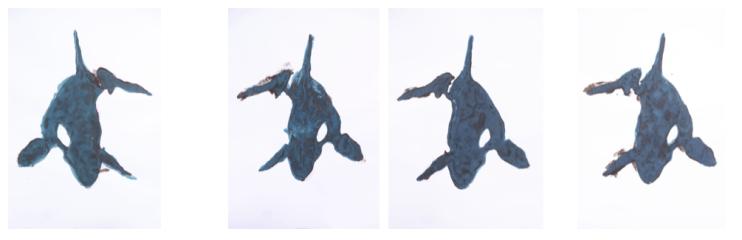 4 orcas en azul